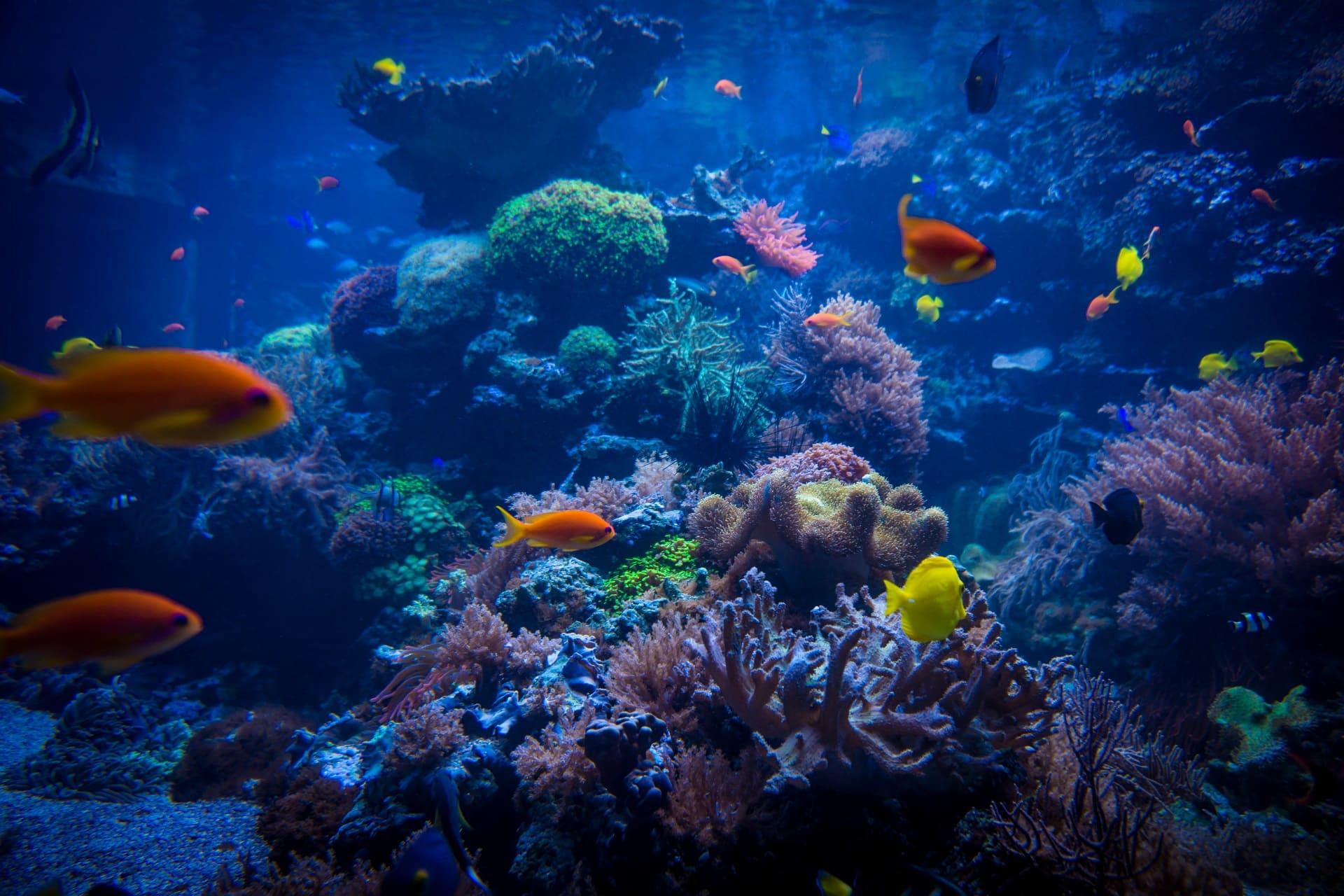 aquarium dream meaning, dream about aquarium, aquarium dream interpretation, seeing in a dream aquarium