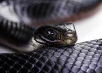 Snake Dream Meaning