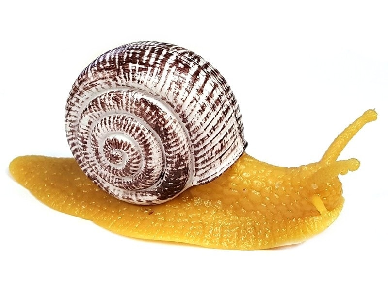 snail dream meaning, dream about snail, snail dream interpretation, seeing in a dream snail