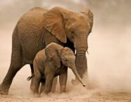 Elephant Dream Meaning