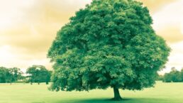 Tree Dream Meaning