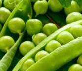 Peas Dream Meaning