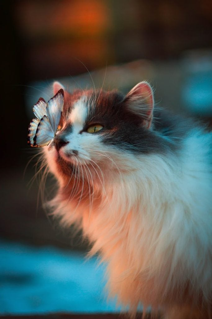 Cat Dream Meaning Most Comprehensive Dream Dictionary